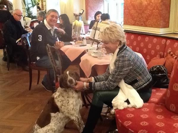 cachorro em salzburg