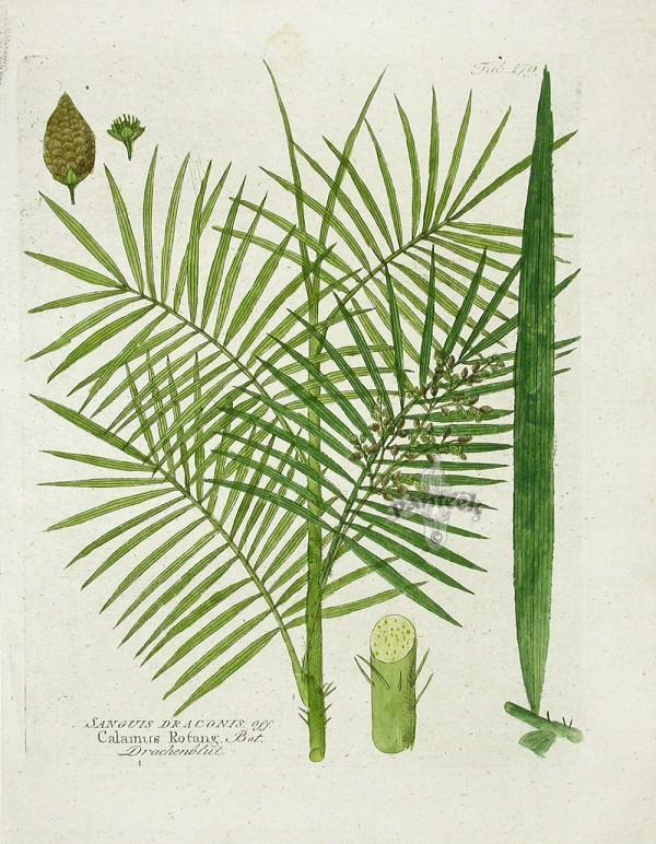 o caule da planta é cheio de espinhos, que os artesãos precisam retirar antes de trançar as fibras.