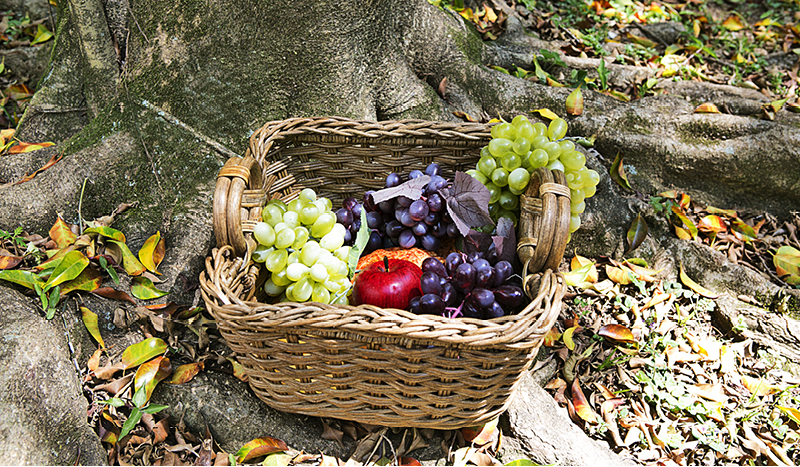 Frutas que não precisam ser cortadas, como uvas e maçã, são ótimas para piquenique.